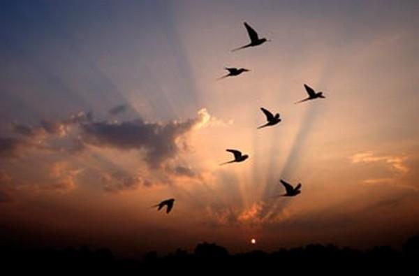 vol-oiseaux